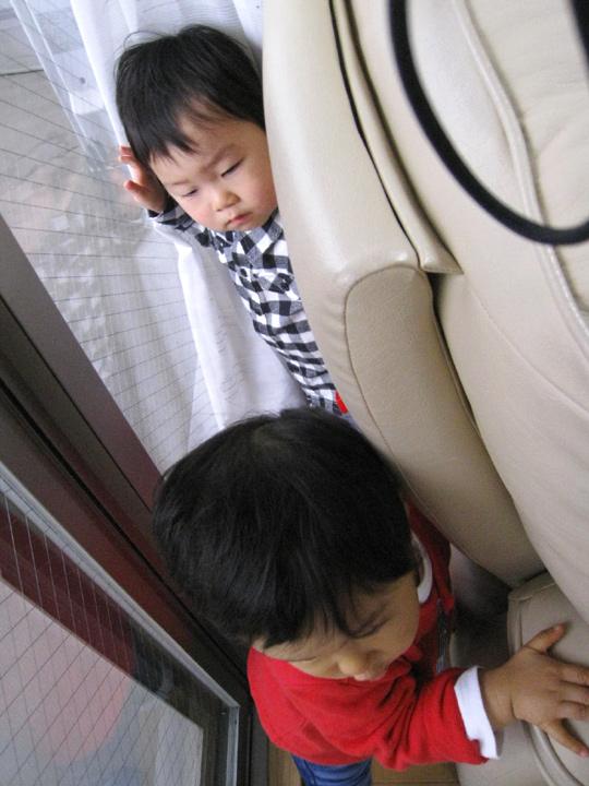 ソファーと窓の隙間に引き込むカイ坊ちゃん